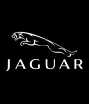 Женская майка борцовка  Jaguar (Ягуар)